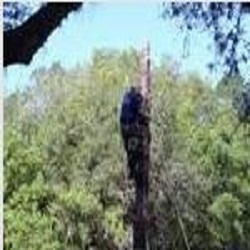 Windsor & Son Tree Service image 3