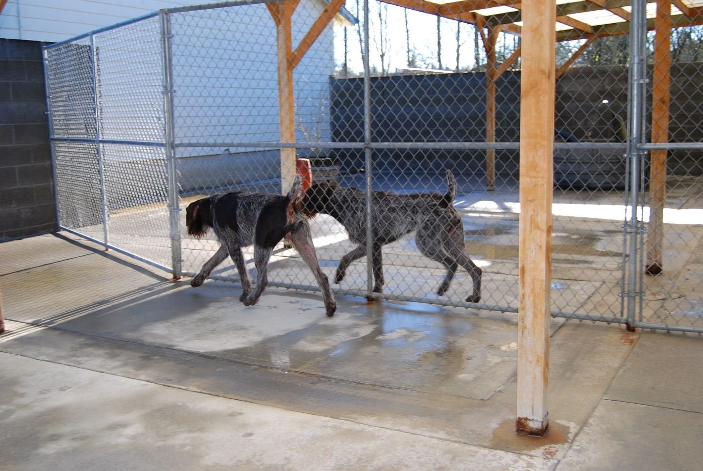 Hammond Kennels, INC image 1