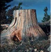 Adirondack Tree Specialists Inc image 7