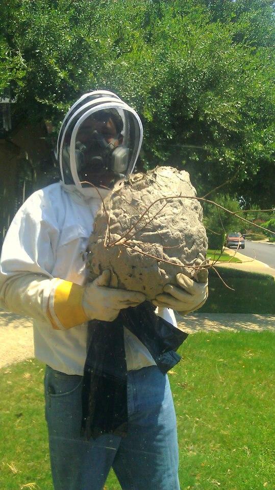 Biz-zz Bee Farms Pest Control image 4
