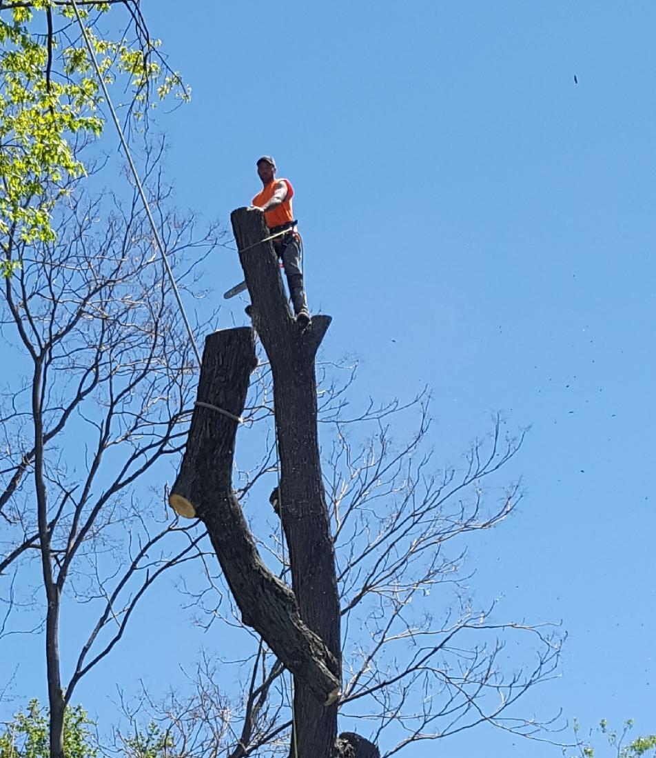 Coffman's Tree Service image 33