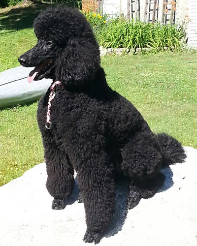 Bark Avenue Pet Salon image 5