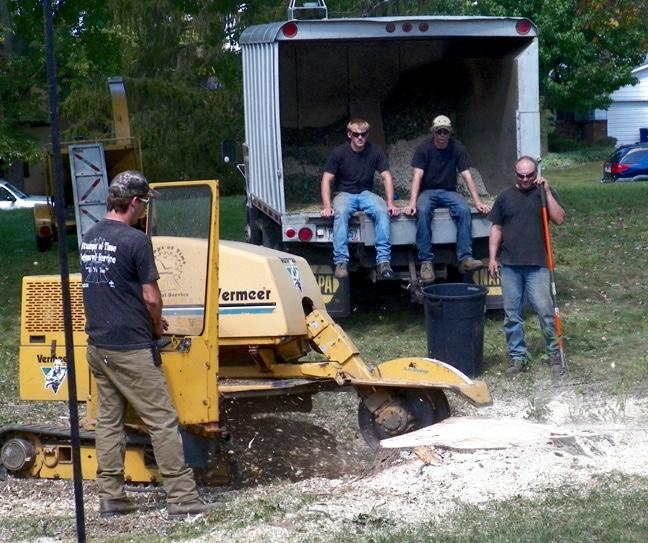 Stumps Of Time Removal Service image 0
