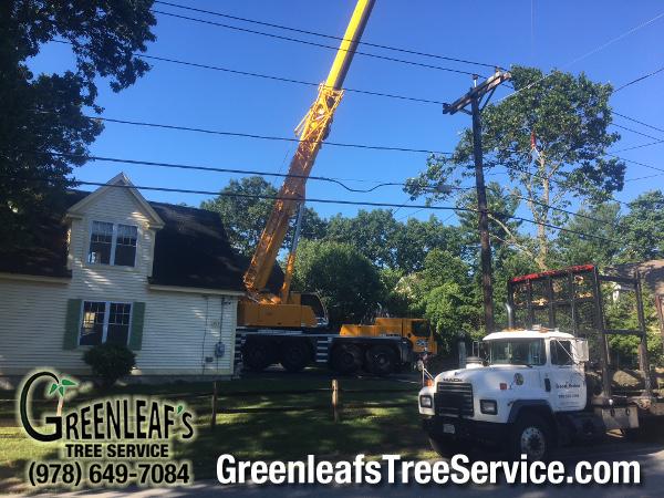 Greenleaf's Tree Service image 44