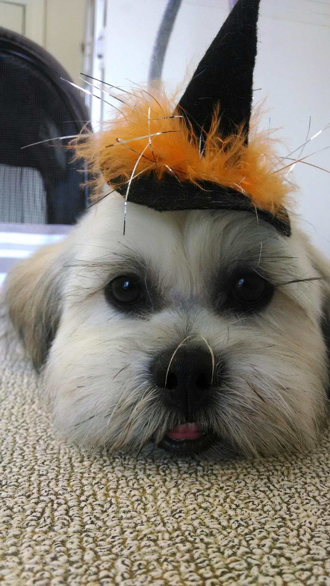 Personal Touch Dog Grooming image 5