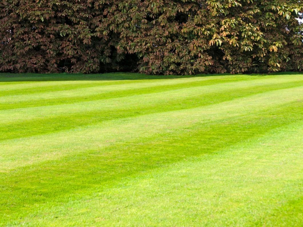 DM's Landscape and Lawn Care Maintenance image 1