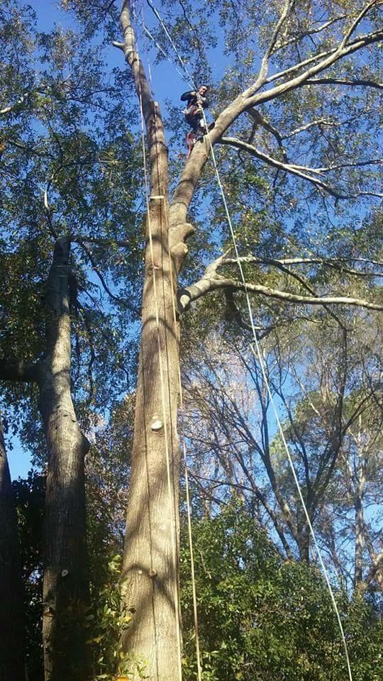 Beaver Tree Service Inc image 2