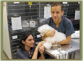 Chelsea Animal Hospital image 3
