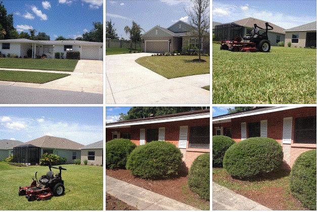 Sarasota Lawncare Service image 8