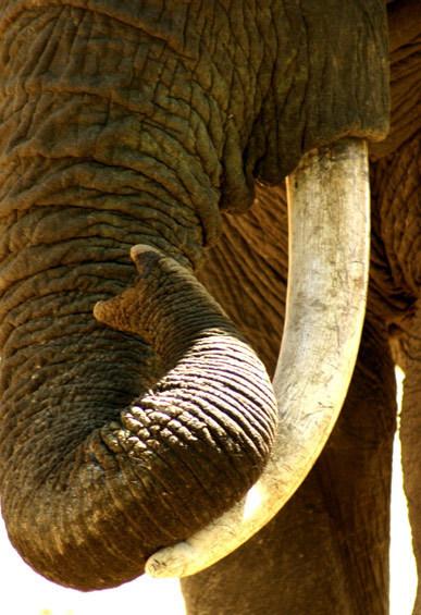 Saving Wildlife International image 8