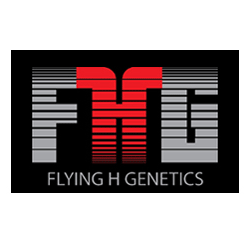 Flying H Genetics