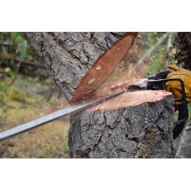 Northern California Affordable Tree Service