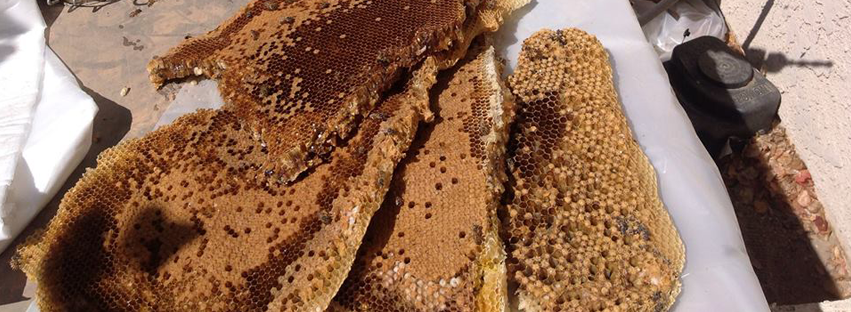 Killer Bee Pest Control, Inc image 1