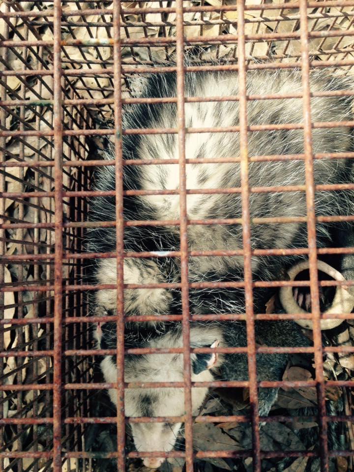 PeeDee Wildlife Control, Inc. image 1