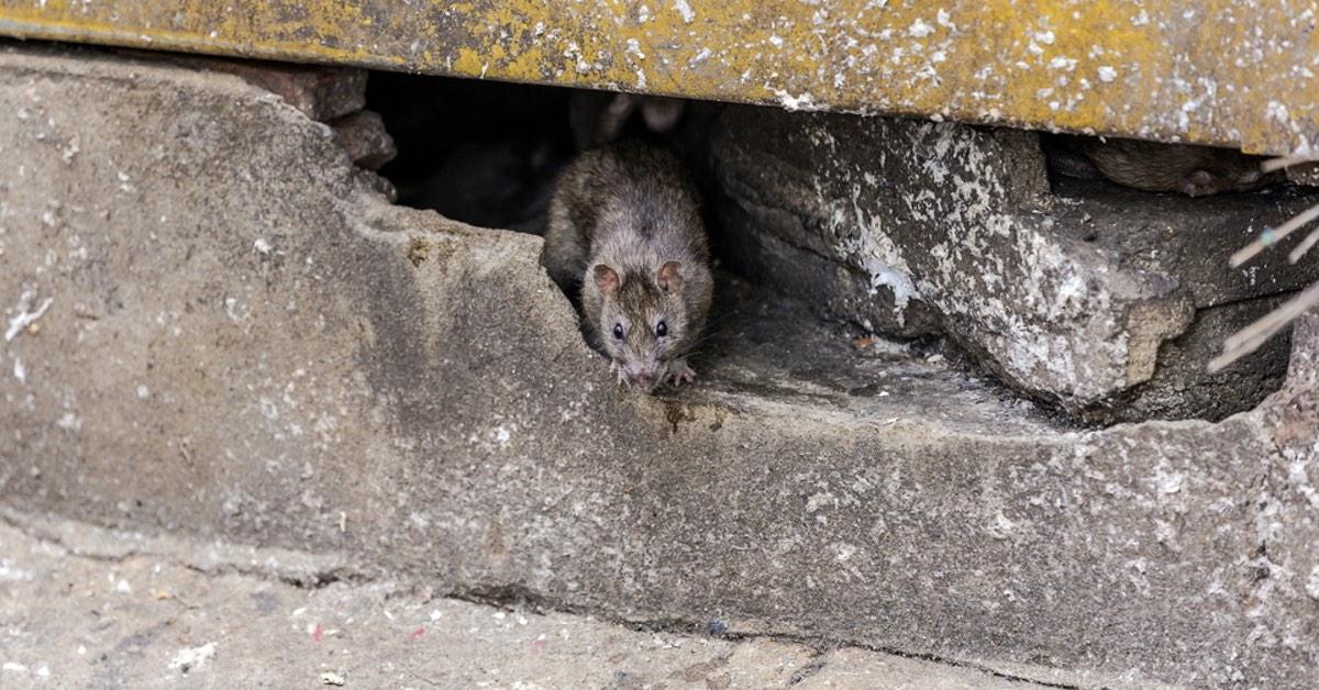 NJ Pest Control image 31
