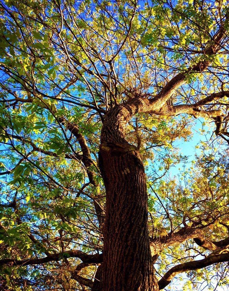 ABC Tree Service image 4