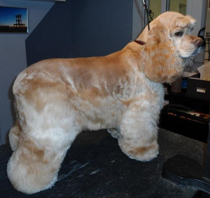 ALL Groomed UP image 5