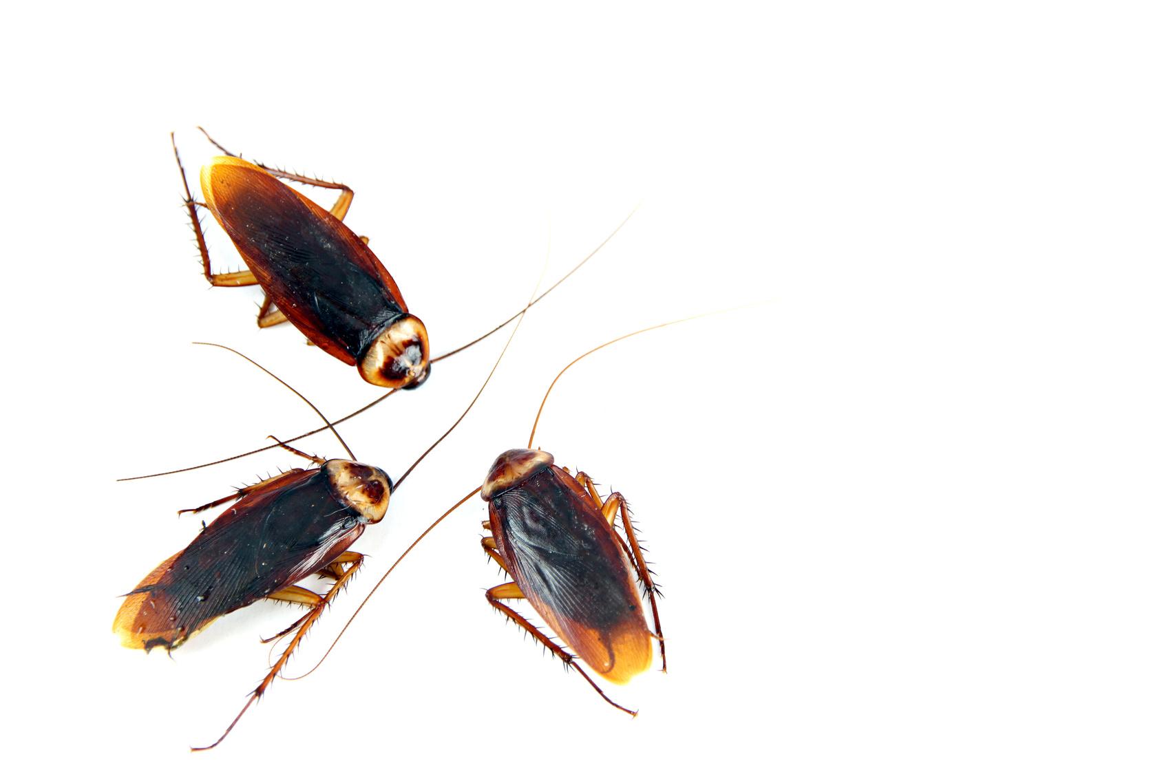 Verminator Pest Control LLC image 3