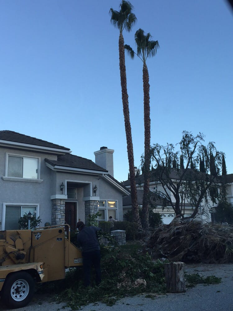 Golden State Tree Service image 9