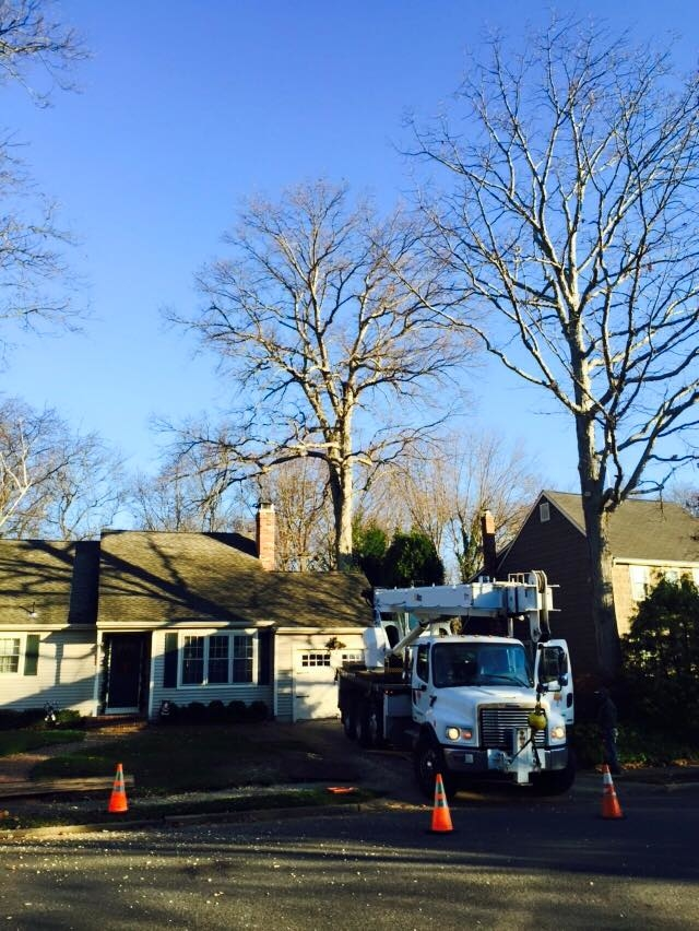Toms River Tree Service image 4