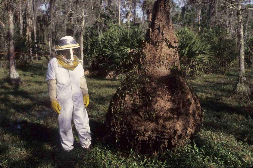 GBU Bee Removal