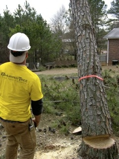 Houston Tree Service image 6