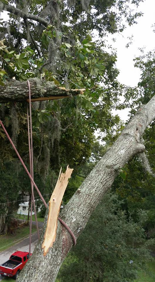 Aerial Tree Service, LLC