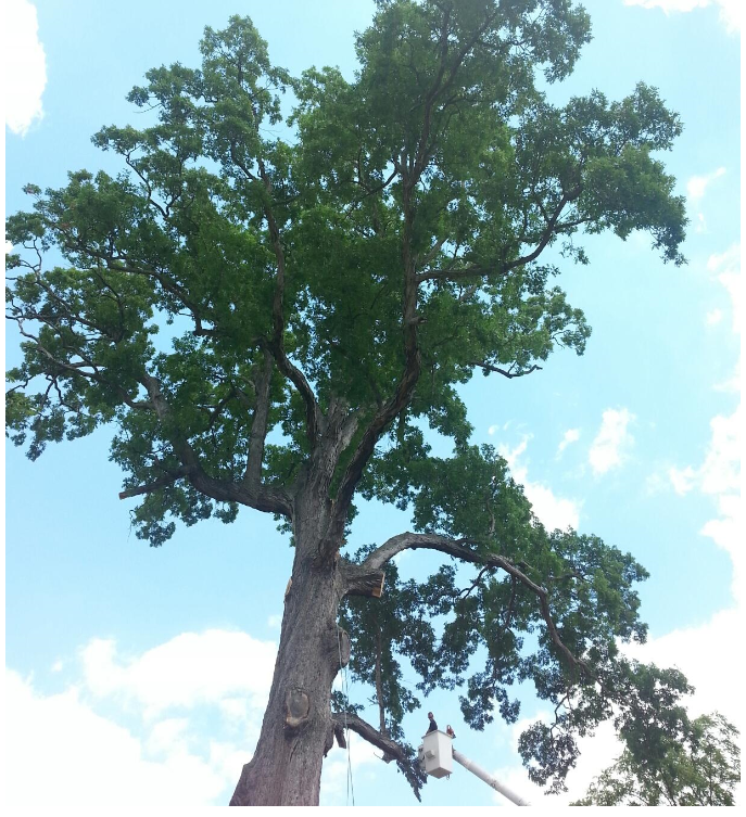 Hughes Tree Service image 2