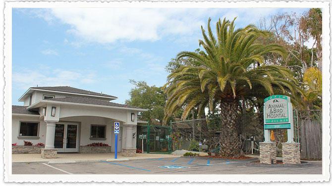 Animal & Bird Hospital of Del Mar image 0