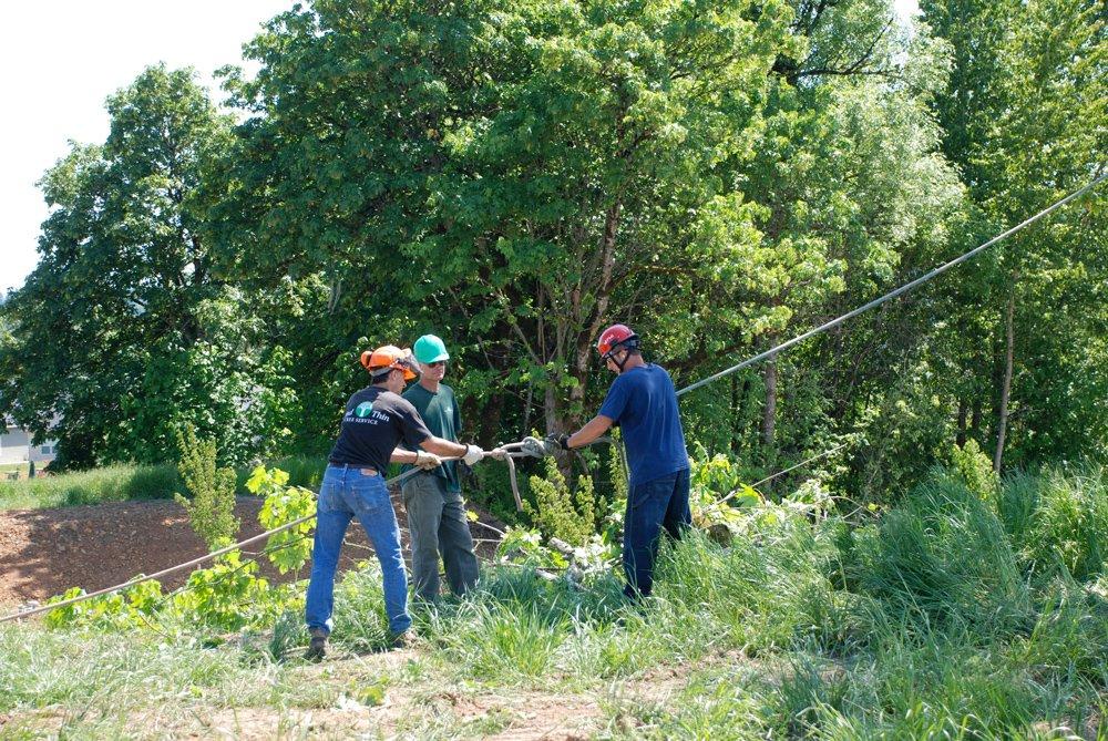 Wind Thin Tree Service Inc. image 0
