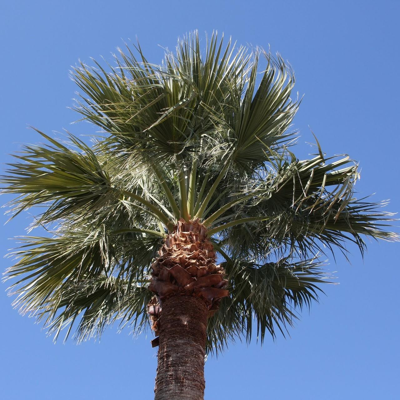 Phoenix AZ Tree Removal