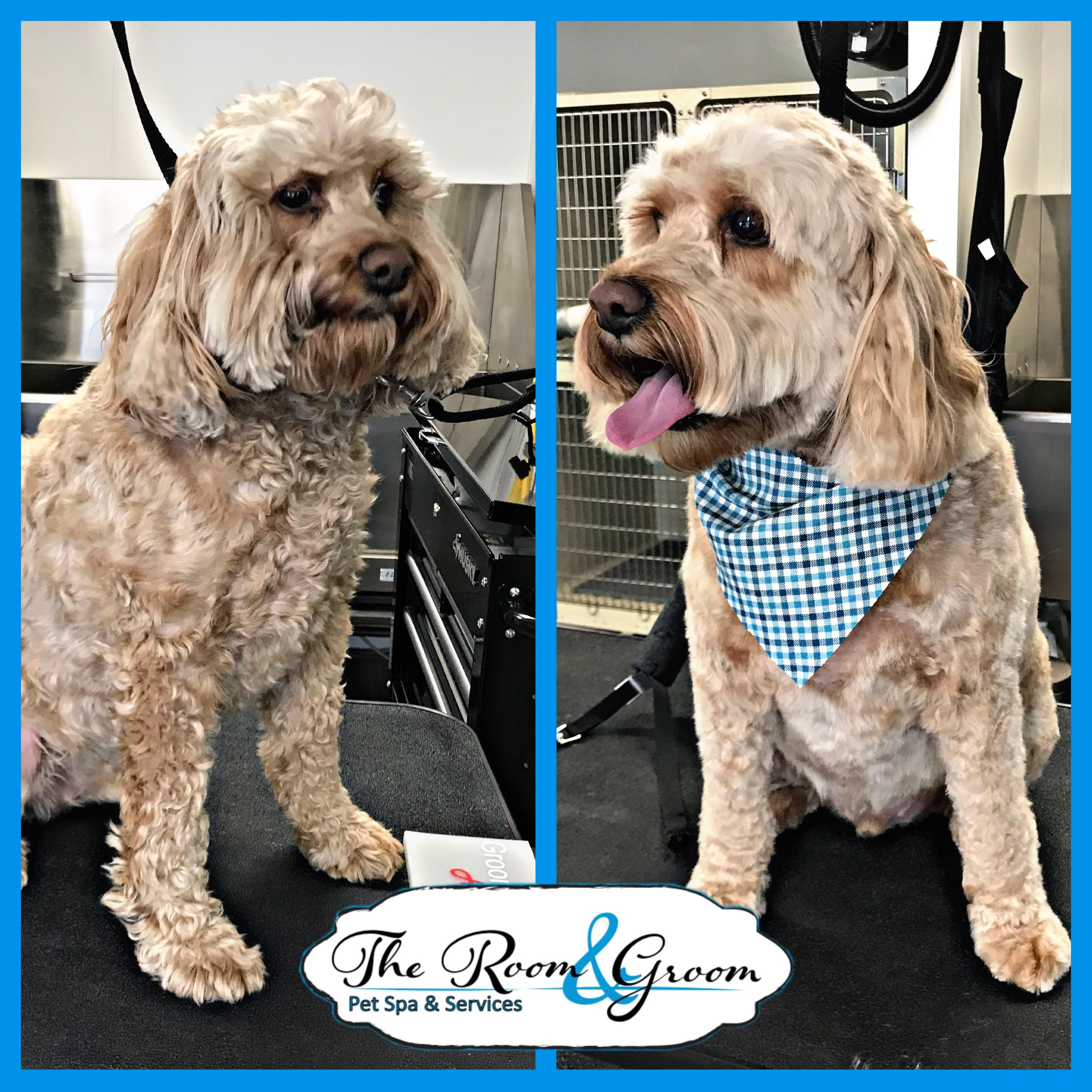 The Room & Groom, Pet Spa & Services image 67