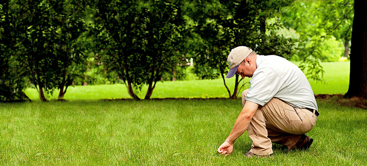 Spring-Green Lawn Care image 2