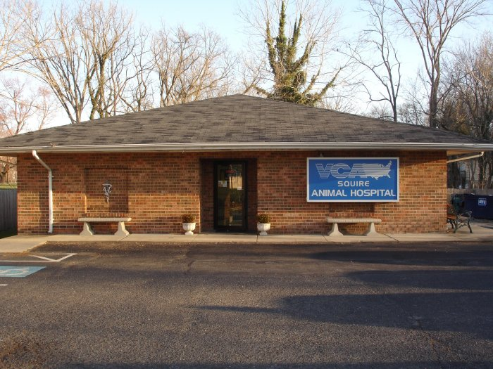 VCA Squire Animal Hospital - CLOSED image 7