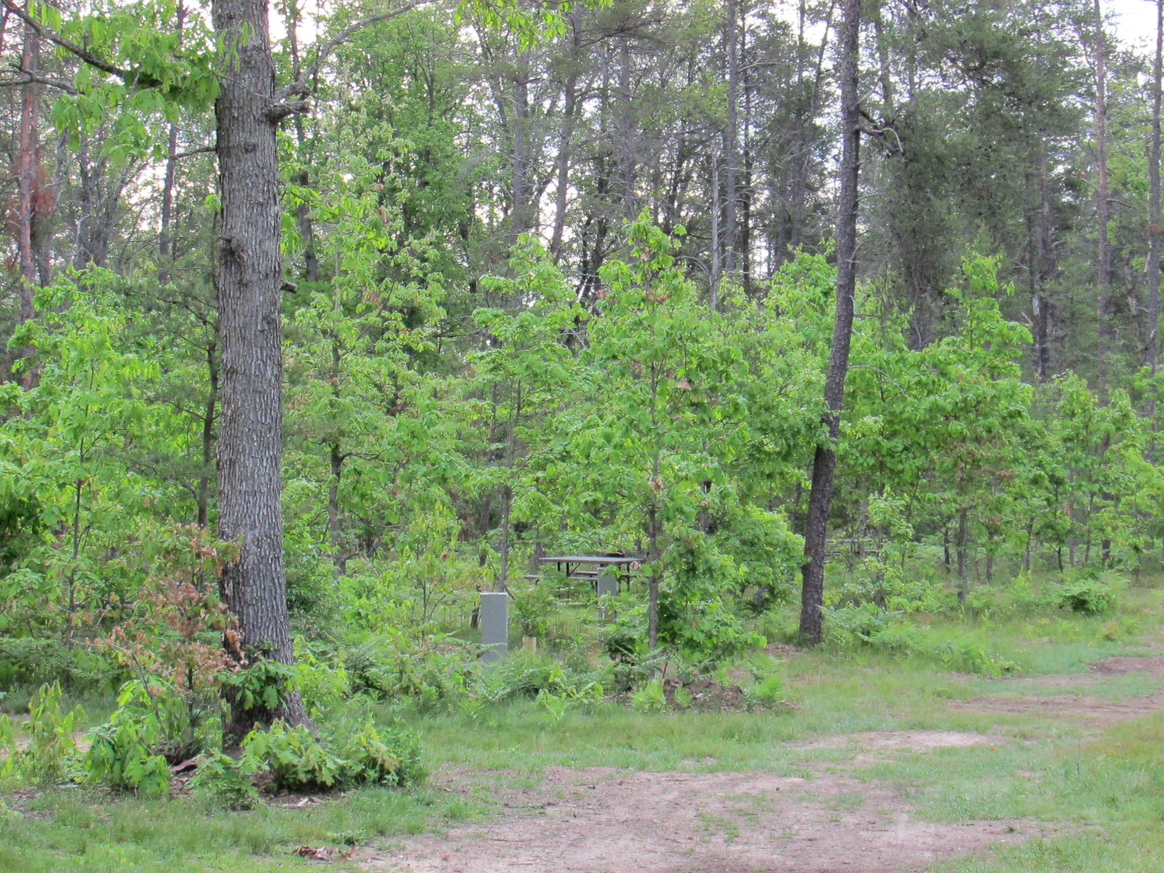 Best Bear Lodge & Campground Baldwin/Irons Area image 17
