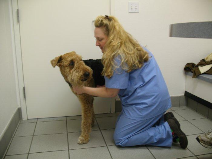 VCA Central Animal Hospital - ad image