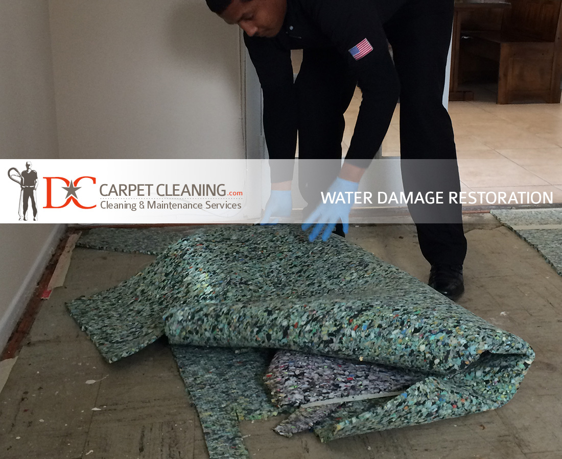 DC Carpet Cleaning image 16