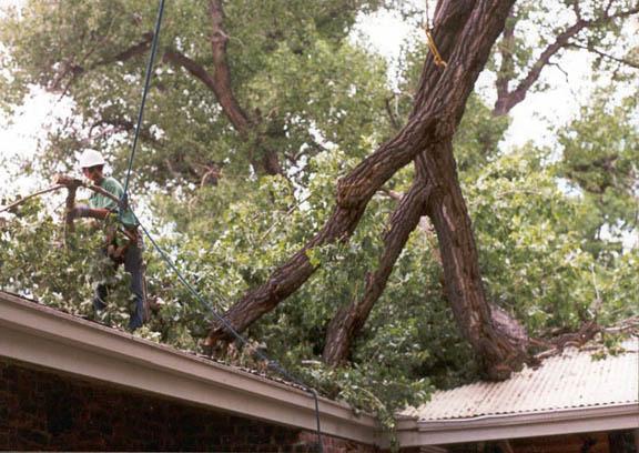 Houston Tree Service image 3
