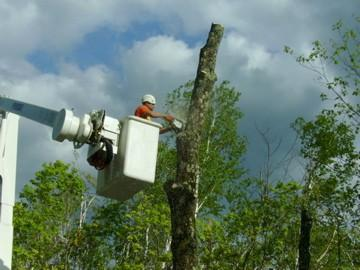 Houston Tree Service image 10