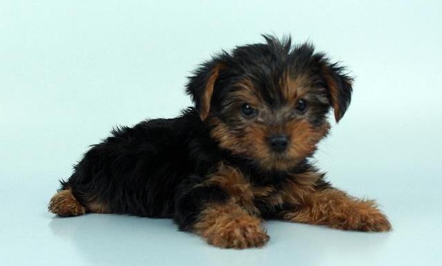 Chews A Puppy image 4