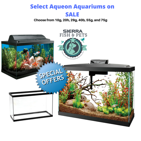 Holiday Special! Take advantage of this great deal! Select Aqueon Aquariums for only $1/Gallon. Choose from 10g, 20g, 40g, 55g or 75g! Stop by our store to pick yours out as special is valid while supplies last!