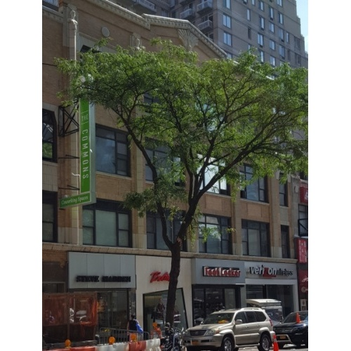 Recovery PT (Upper East Side NYC)