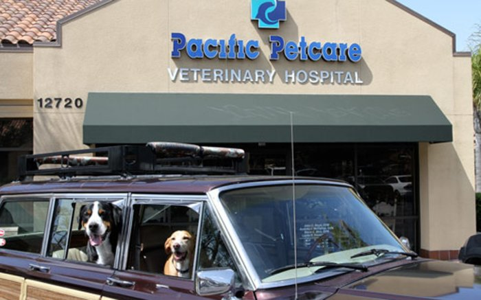 Services Pet Grooming In San Diego Ca San Diego