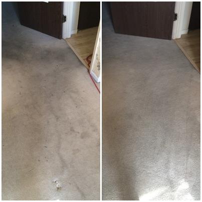 Pristine Carpet Cleaning image 27