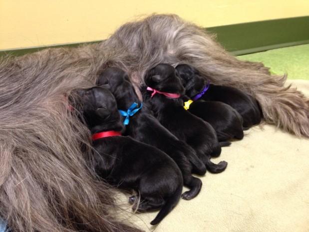 North Oatlands Animal Hospital & Reproduction Center image 4
