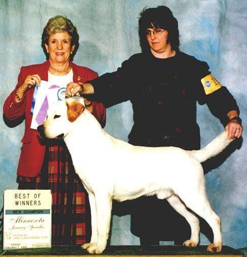 Sonlight Labrador Retrievers