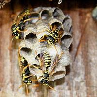 D & T Pest and Termite Control, Inc. image 8