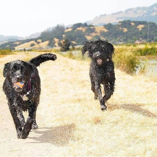 Fetch! Pet Care image 22