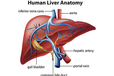 Advanced Gastroenterology image 3