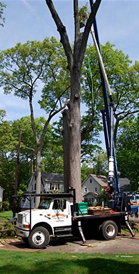 Amoroso Tree Service Inc image 5